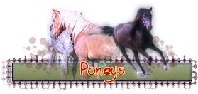 ico_poneys